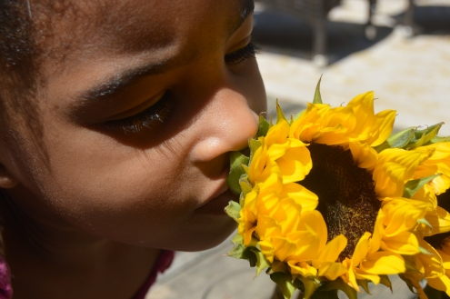 Lourdes smelling a sunflower for the very first time.